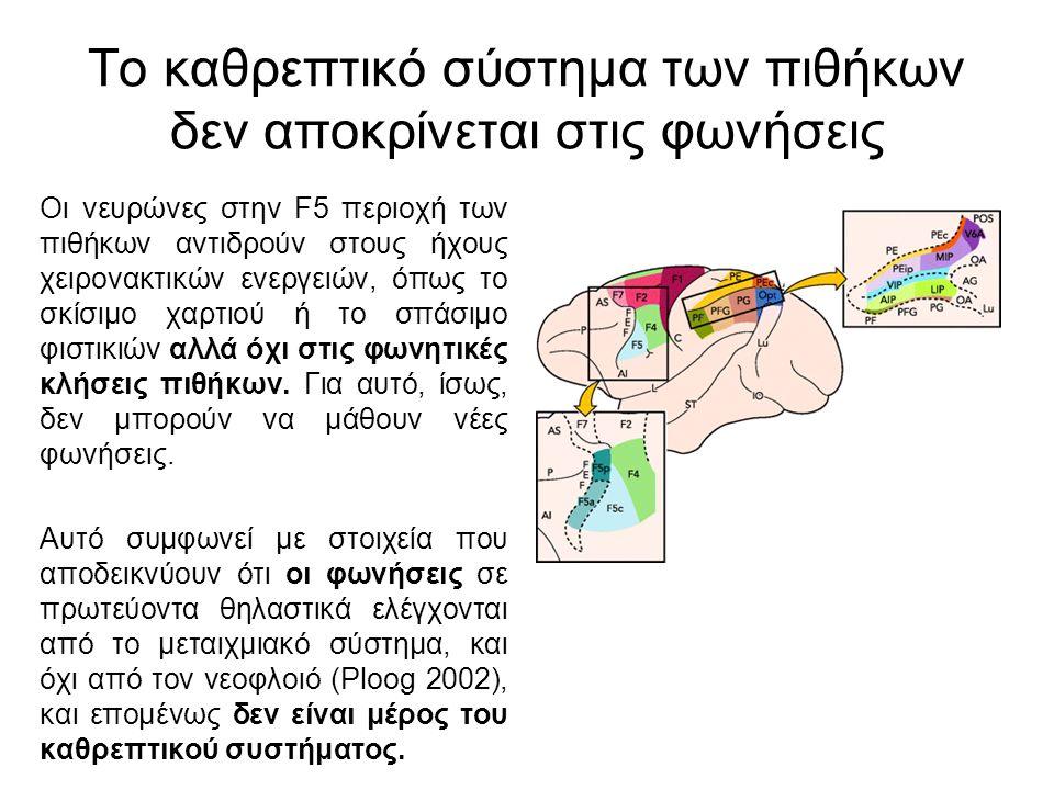 Το καθρεπτικό σύστημα των πιθήκων δεν αποκρίνεται στις φωνήσεις Οι νευρώνες στην F5 περιοχή των πιθήκων αντιδρούν στους ήχους χειρονακτικών ενεργειών, όπως το σκίσιμο χαρτιού ή το σπάσιμο φιστικιών αλλά όχι στις φωνητικές κλήσεις πιθήκων.