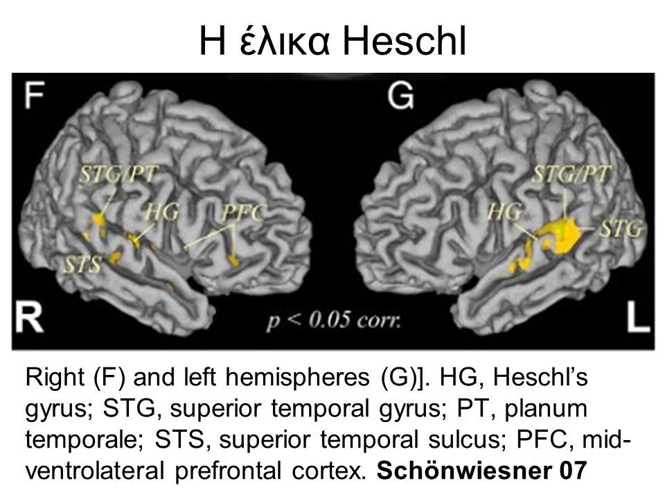 Η περιοχή Broca στο μετωπιαίο λοβό Η περιοχή αυτή στον άνθρωπο είναι μεγαλύτερη στο αριστερό ημισφαίριο του εγκεφάλου από ό,τι στο δεξί.