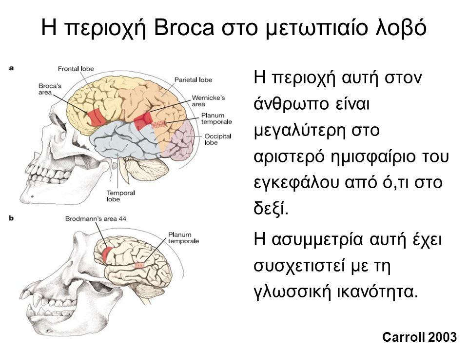 Τα πρωτεύοντα επικοινωνούν με χειρονομίες και φωνήσεις Για παράδειγμα, οι Pollick και de Waal (2007) έδειξαν ότι οι χιμπατζήδες και οι μπονόμπο επικοινωνούν πιο συχνά και με πιο ευέλικτο τρόπο χρησιμοποιώντας σωματικές χειρονομίες παρά φωνήσεις.