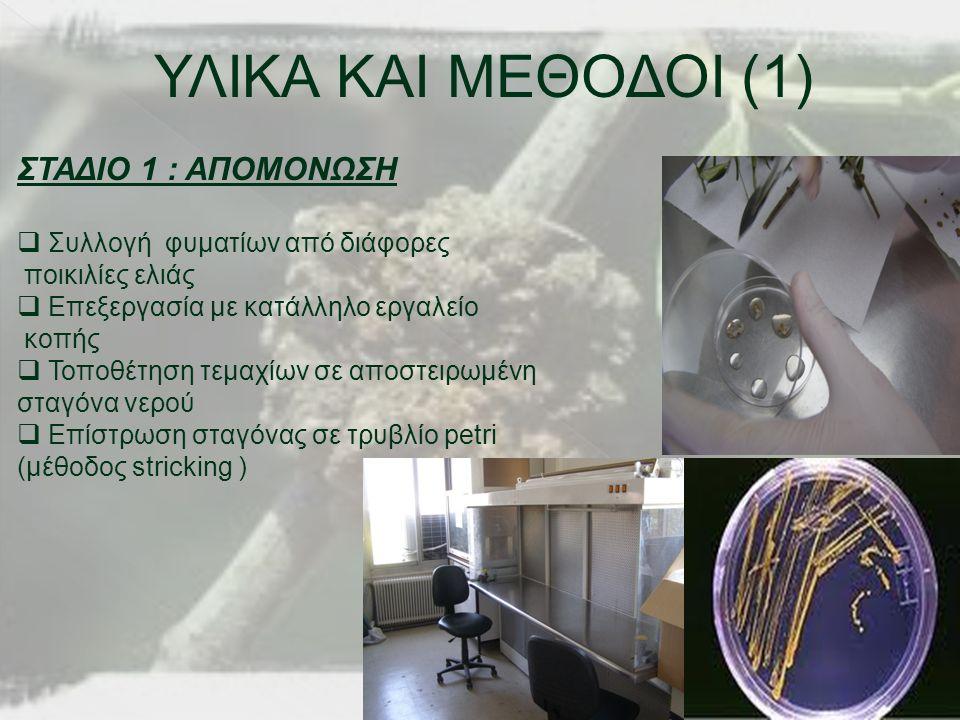 ΥΛΙΚΑ ΚΑΙ ΜΕΘΟΔΟΙ (1) ΣΤΑΔΙΟ 1 : ΑΠΟΜΟΝΩΣΗ  Συλλογή φυματίων από διάφορες ποικιλίες ελιάς  Επεξεργασία με κατάλληλο εργαλείο κοπής  Τοποθέτηση τεμαχίων σε αποστειρωμένη σταγόνα νερού  Επίστρωση σταγόνας σε τρυβλίο petri (μέθοδος stricking )