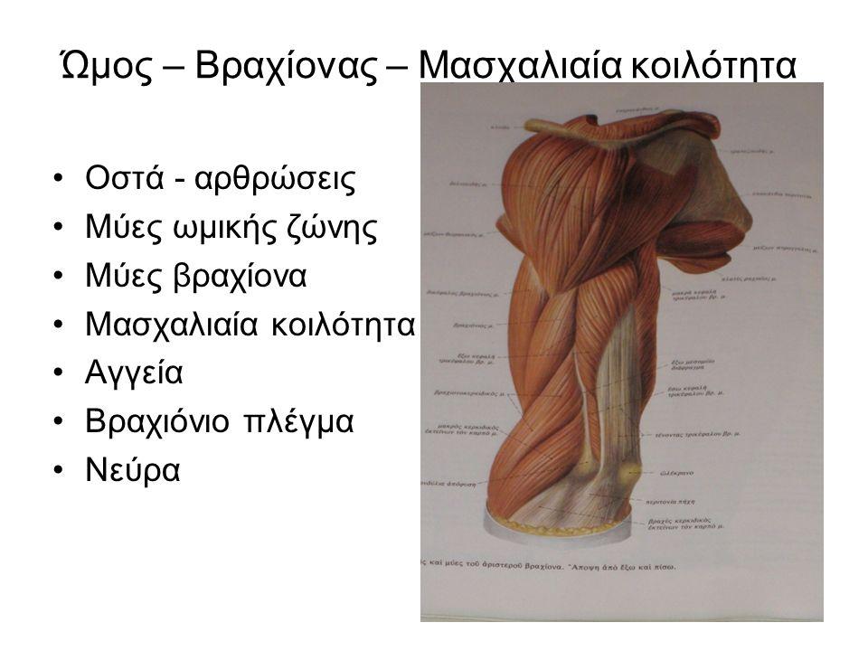 Ώμος – Βραχίονας – Μασχαλιαία κοιλότητα Οστά - αρθρώσεις Μύες ωμικής ζώνης Μύες βραχίονα Μασχαλιαία κοιλότητα Αγγεία Βραχιόνιο πλέγμα Νεύρα
