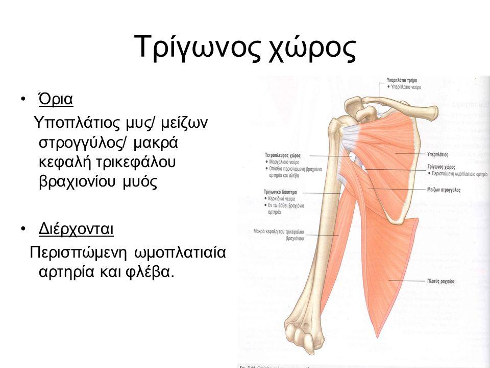Τρίγωνος χώρος Όρια Υποπλάτιος μυς/ μείζων στρογγύλος/ μακρά κεφαλή τρικεφάλου βραχιονίου μυός Διέρχονται Περισπώμενη ωμοπλατιαία αρτηρία και φλέβα.