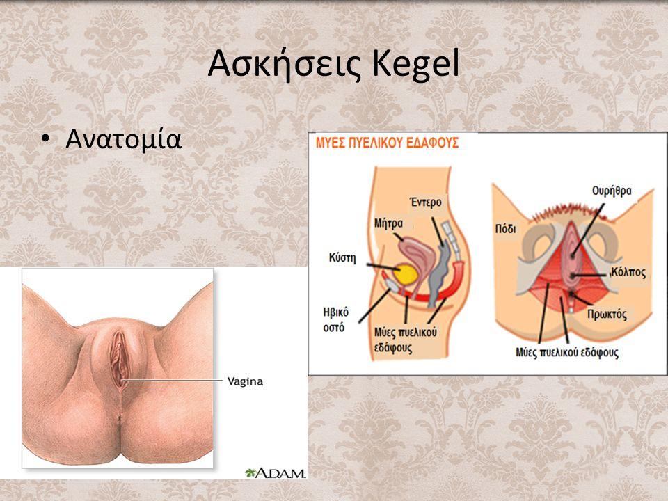 Ασκήσεις Kegel Ανατομία