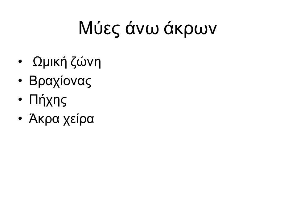 Μύες περιναίου Ανελκτήρα του πρωκτού Δύο μοίρες Λαγόνια - λαγονοκοκκυγικός Ηβική - ηβοκοκκυγικός - ηβοευθυικός.