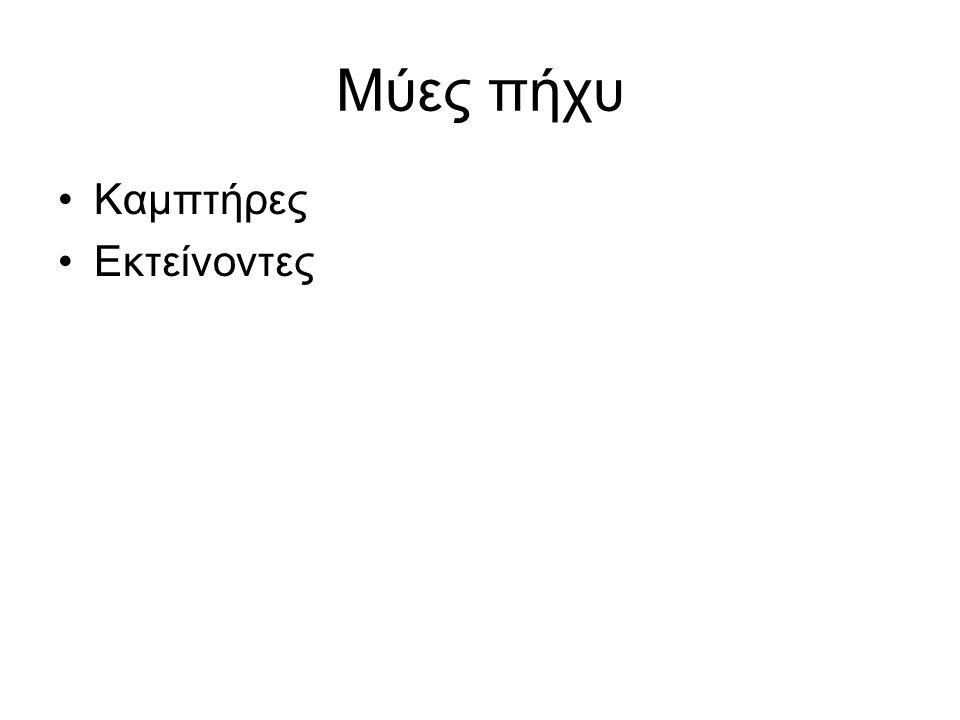 Καμπτήρες Στρογγύλος πρηνιστής Κερκιδικός καμπτήρας του καρπού Μακρός παλαμικός Ωλένιος καμπτήρας του καρπού Επιπολής κοινός καμπτήρας των δακτύλων Εν τω βάθει κοινό καμπτήρα των δακτύλων Μακρό καμπτήρα του αντίχειρα Τετράγωνο πρηνιστή