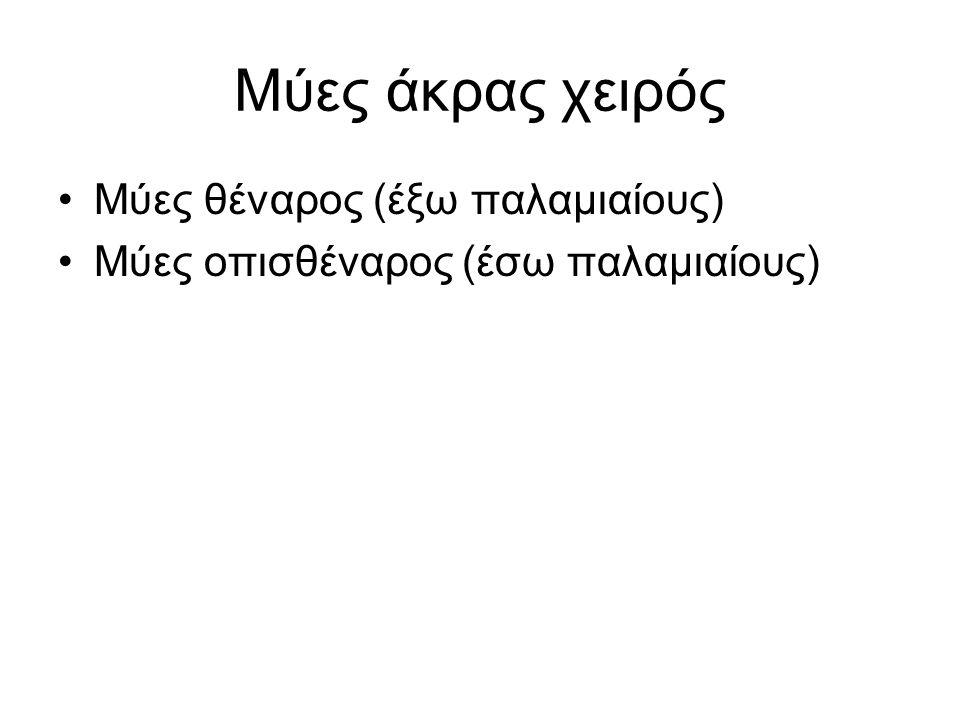 Μύες άκρας χειρός Μύες θέναρος (έξω παλαμιαίους) Μύες οπισθέναρος (έσω παλαμιαίους)