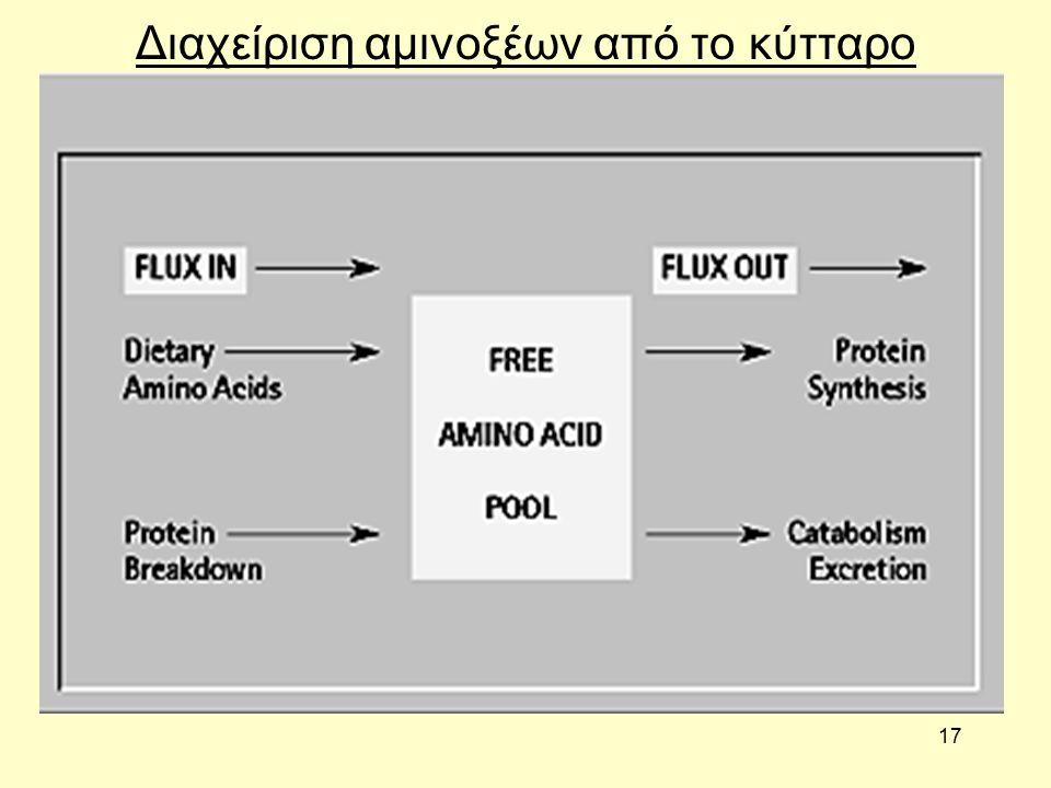 17 Διαχείριση αμινοξέων από το κύτταρο