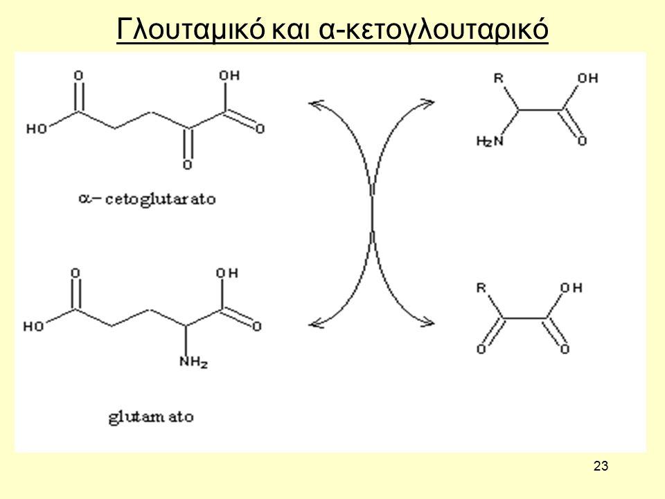 23 Γλουταμικό και α-κετογλουταρικό