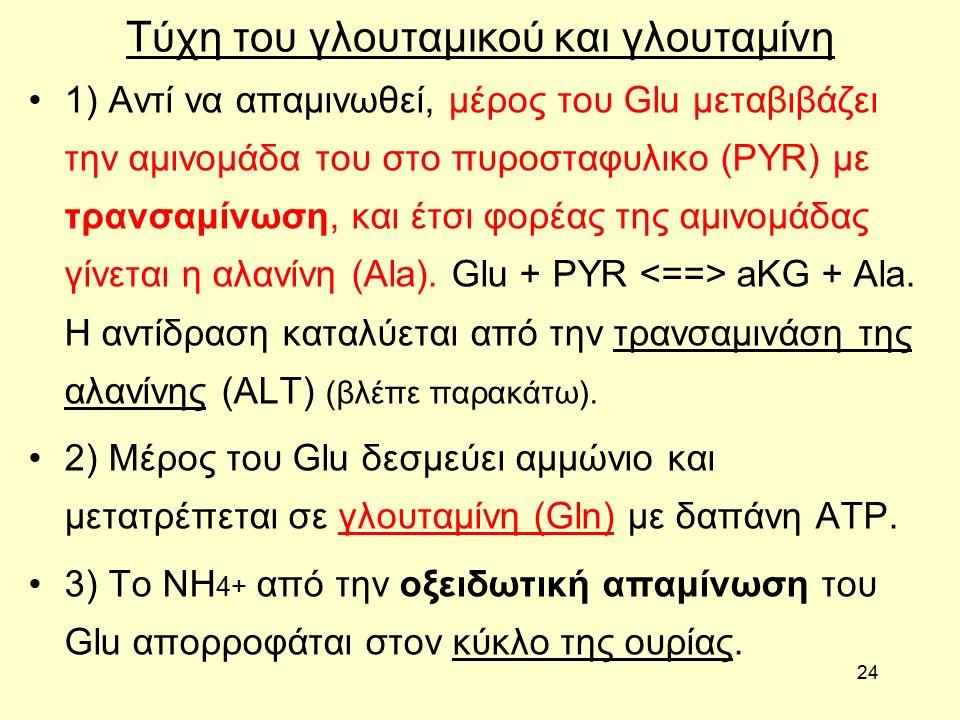 24 Τύχη του γλουταμικού και γλουταμίνη 1) Aντί να απαμινωθεί, μέρος του Glu μεταβιβάζει την αμινομάδα του στο πυροσταφυλικο (PYR) με τρανσαμίνωση, και έτσι φορέας της αμινομάδας γίνεται η αλανίνη (Αla).