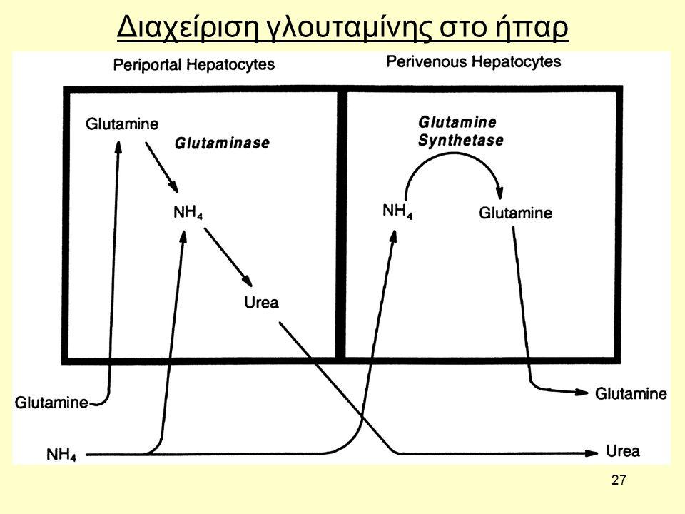 27 Διαχείριση γλουταμίνης στο ήπαρ