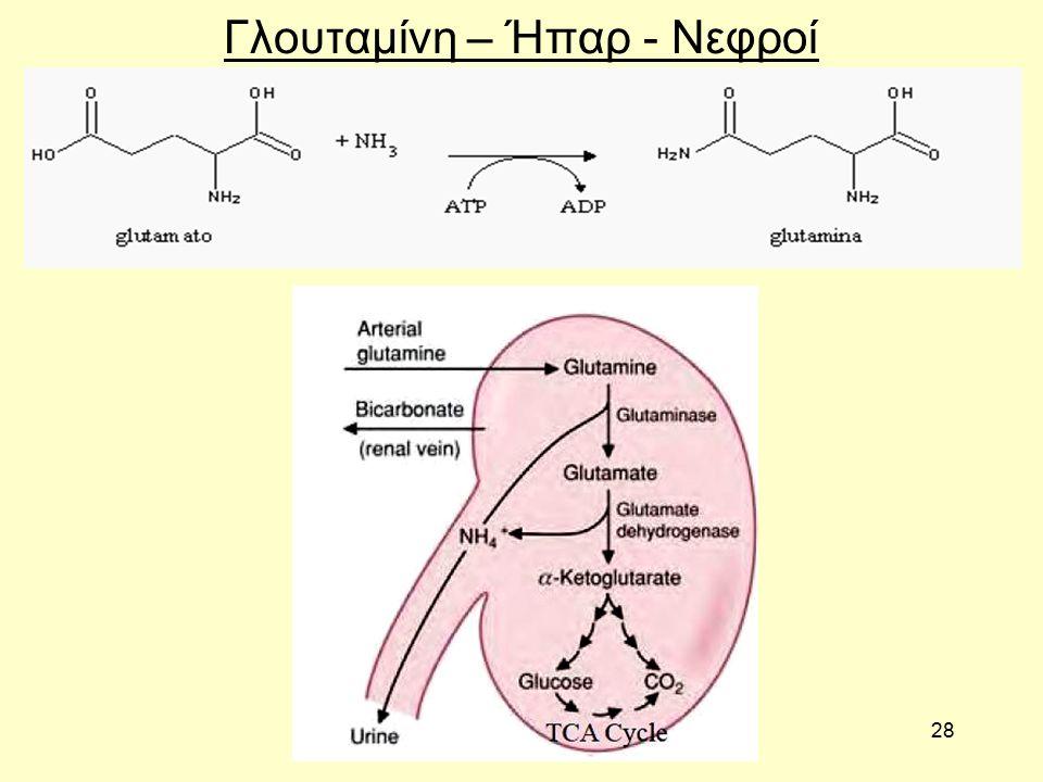 28 Γλουταμίνη – Ήπαρ - Νεφροί