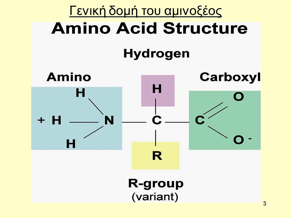 3 Γενική δομή του αμινοξέος