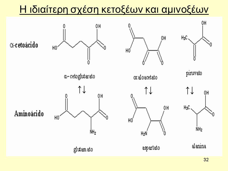 32 Η ιδιαίτερη σχέση κετοξέων και αμινοξέων ↑↓