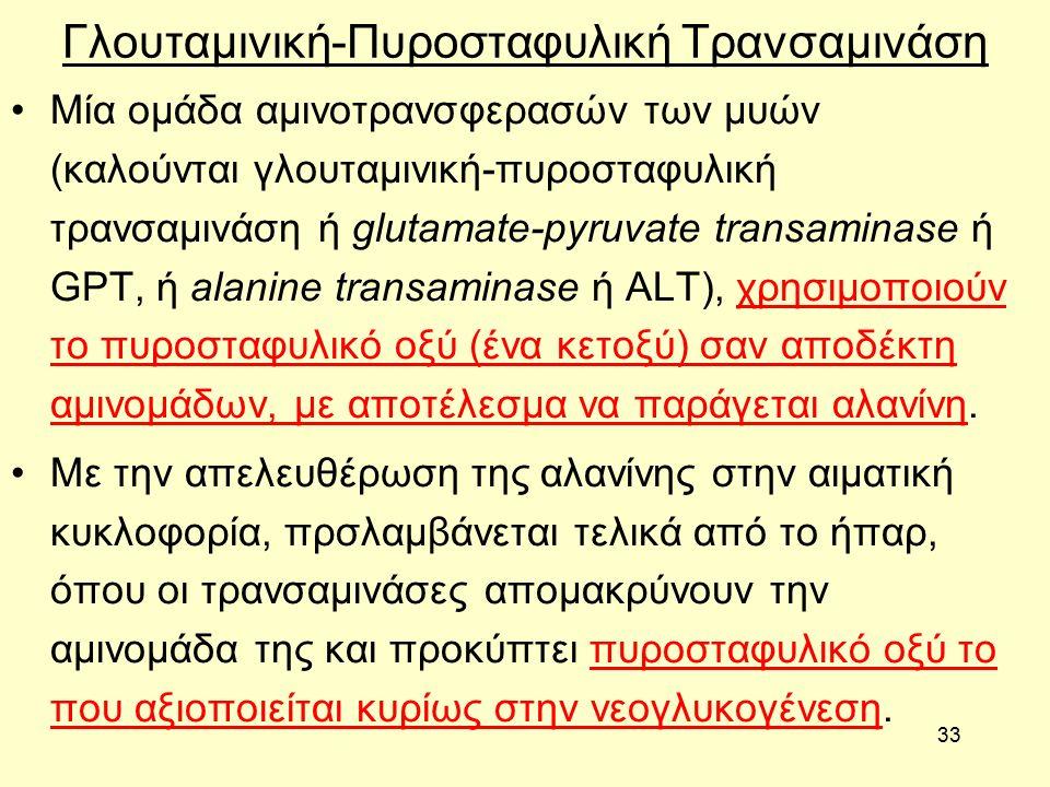33 Γλουταμινική-Πυροσταφυλική Τρανσαμινάση Μία ομάδα αμινοτρανσφερασών των μυών (καλούνται γλουταμινική-πυροσταφυλική τρανσαμινάση ή glutamate-pyruvate transaminase ή GPT, ή alanine transaminase ή ALT), χρησιμοποιούν το πυροσταφυλικό οξύ (ένα κετοξύ) σαν αποδέκτη αμινομάδων, με αποτέλεσμα να παράγεται αλανίνη.