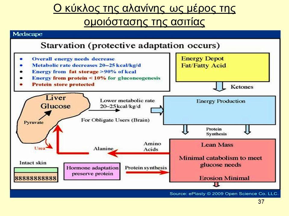 37 Ο κύκλος της αλανίνης ως μέρος της ομοιόστασης της ασιτίας
