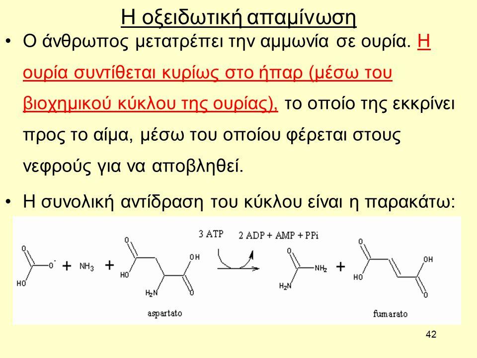 42 Η οξειδωτική απαμίνωση Ο άνθρωπος μετατρέπει την αμμωνία σε ουρία.