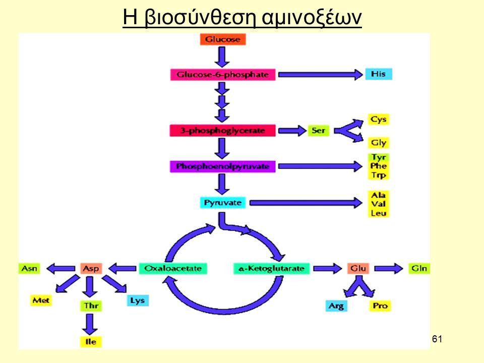 61 Η βιοσύνθεση αμινοξέων