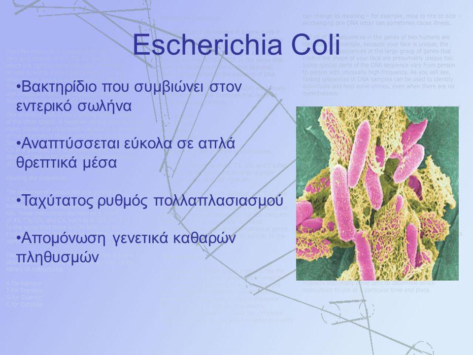Bακτηρίδιο που συμβιώνει στον εντερικό σωλήνα Αναπτύσσεται εύκολα σε απλά θρεπτικά μέσα Ταχύτατος ρυθμός πολλαπλασιασμού Απομόνωση γενετικά καθαρών πληθυσμών Escherichia Coli