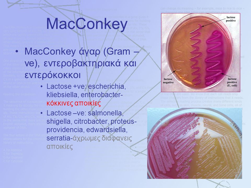 MacConkey MacConkey άγαρ (Gram – ve), εντεροβακτηριακά και εντερόκοκκοι Lactose +ve: escherichia, kliebsiella, enterobacter- κόκκινες αποικίες Lactose –ve: salmonella, shigella, citrobacter, proteus- providencia, edwardsiella, serratia-άχρωμες διαφανεις αποικίες