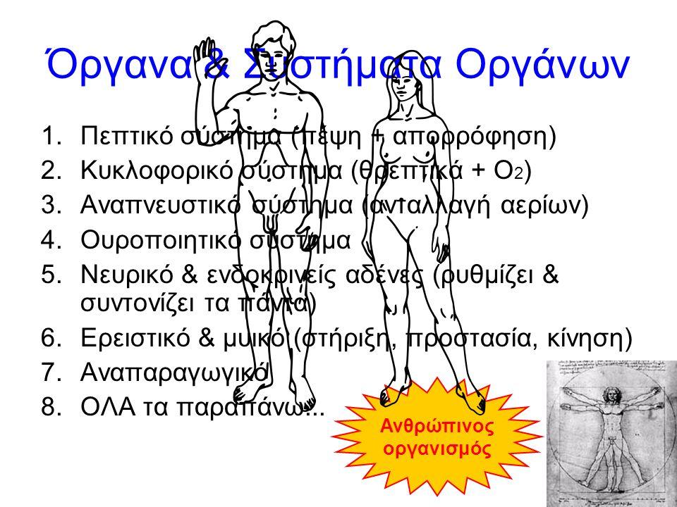18 Όργανα & Συστήματα Οργάνων 1.Πεπτικό σύστημα (πέψη + απορρόφηση) 2.Κυκλοφορικό σύστημα (θρεπτικά + Ο 2 ) 3.Αναπνευστικό σύστημα (ανταλλαγή αερίων) 4.Ουροποιητικό σύστημα 5.Νευρικό & ενδοκρινείς αδένες (ρυθμίζει & συντονίζει τα πάντα) 6.Ερειστικό & μυικό (στήριξη, προστασία, κίνηση) 7.Αναπαραγωγικό 8.ΟΛΑ τα παραπάνω...