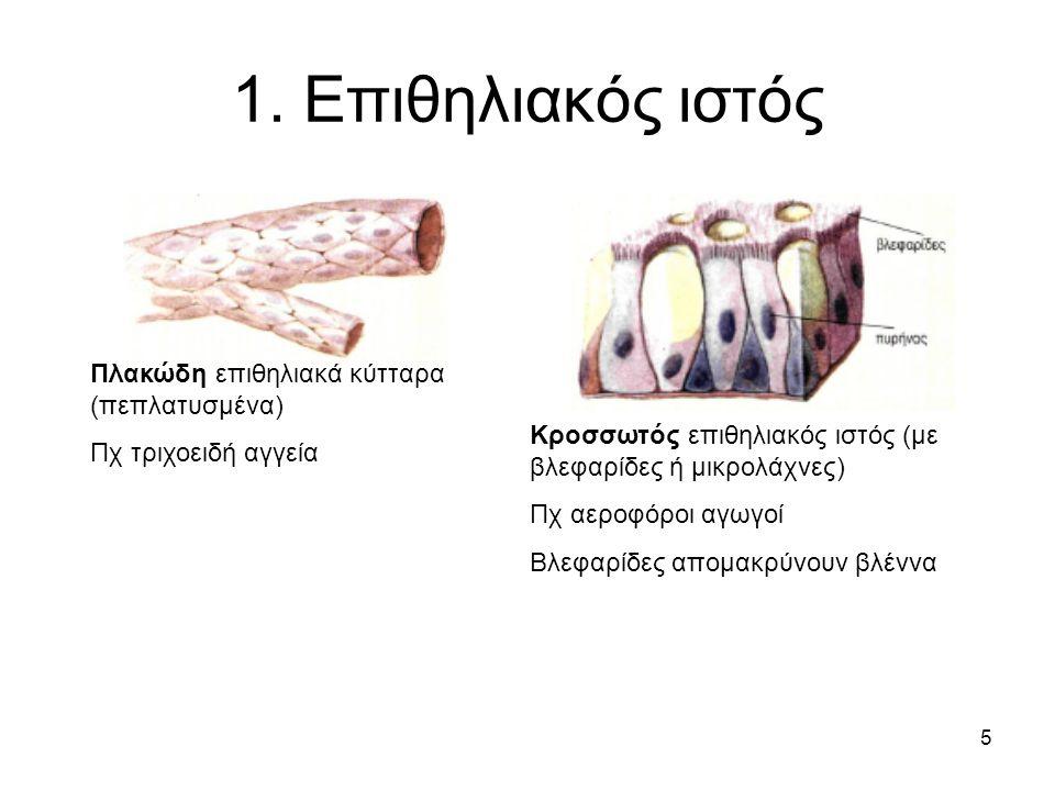 5 1. Επιθηλιακός ιστός Πλακώδη επιθηλιακά κύτταρα (πεπλατυσμένα) Πχ τριχοειδή αγγεία Κροσσωτός επιθηλιακός ιστός (με βλεφαρίδες ή μικρολάχνες) Πχ αερο