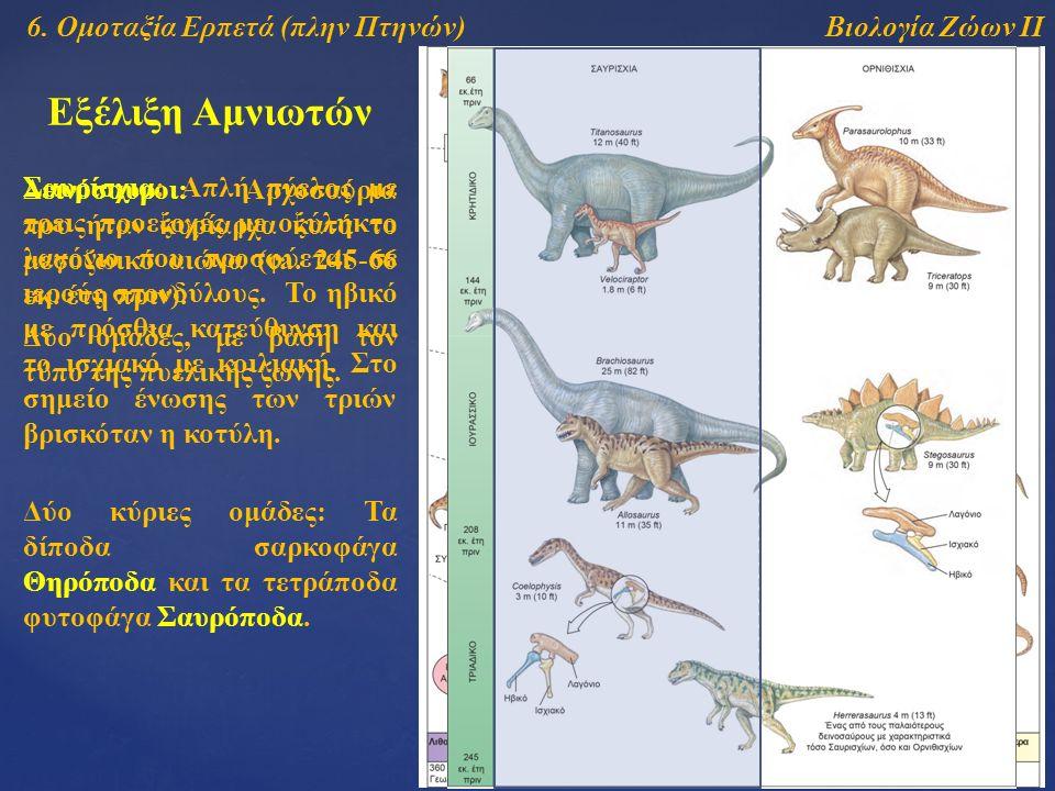 Βιολογία Ζώων ΙΙ Εξέλιξη Αμνιωτών 6. Ομοταξία Ερπετά (πλην Πτηνών) Δεινόσαυροι: Αρχοσαύρια που ήταν κυρίαρχα κατά το μεσοζωικό αιώνα (ca. 245-66 εκ. έ