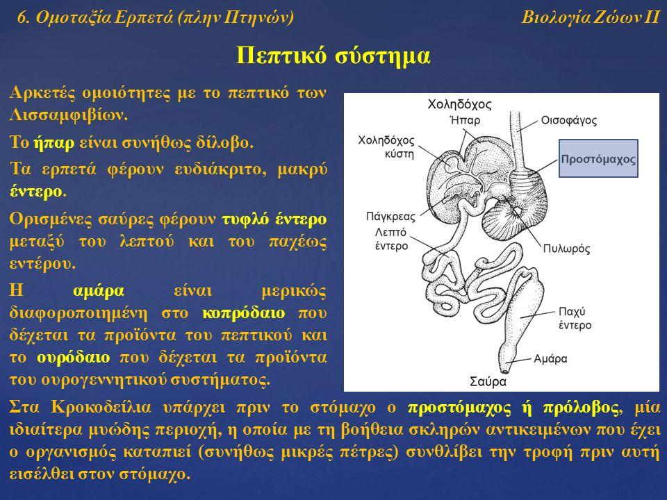 Βιολογία Ζώων ΙΙ Πεπτικό σύστημα 6. Ομοταξία Ερπετά (πλην Πτηνών) Το ήπαρ είναι συνήθως δίλοβο. Στα Κροκοδείλια υπάρχει πριν το στόμαχο ο προστόμαχος