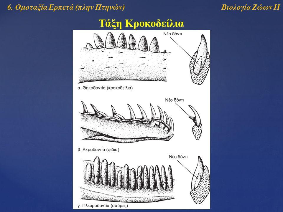Τάξη Κροκοδείλια Βιολογία Ζώων ΙΙ6. Ομοταξία Ερπετά (πλην Πτηνών)