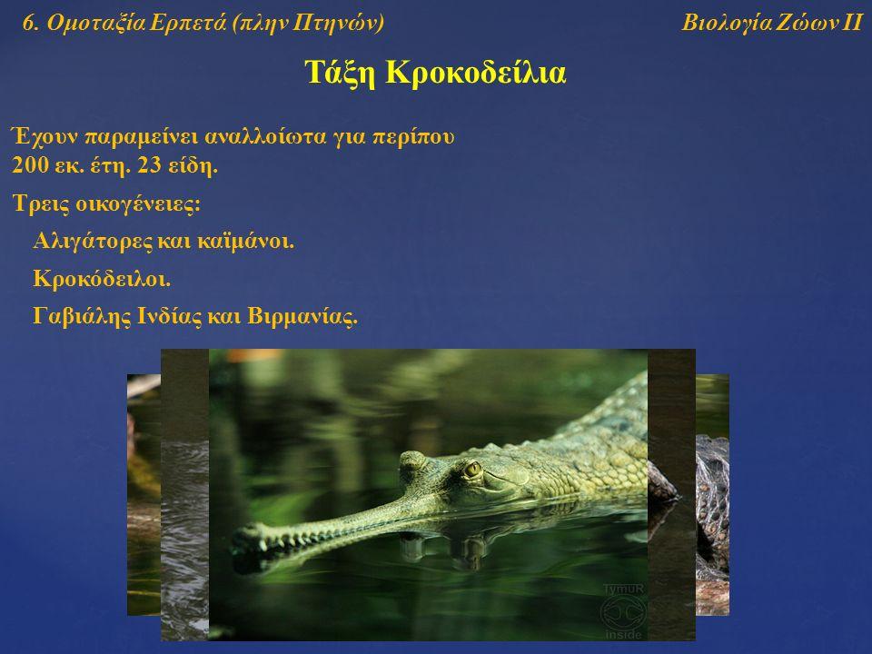 Τάξη Κροκοδείλια Βιολογία Ζώων ΙΙ6. Ομοταξία Ερπετά (πλην Πτηνών) Έχουν παραμείνει αναλλοίωτα για περίπου 200 εκ. έτη. 23 είδη. Αλιγάτορες και καϊμάνο