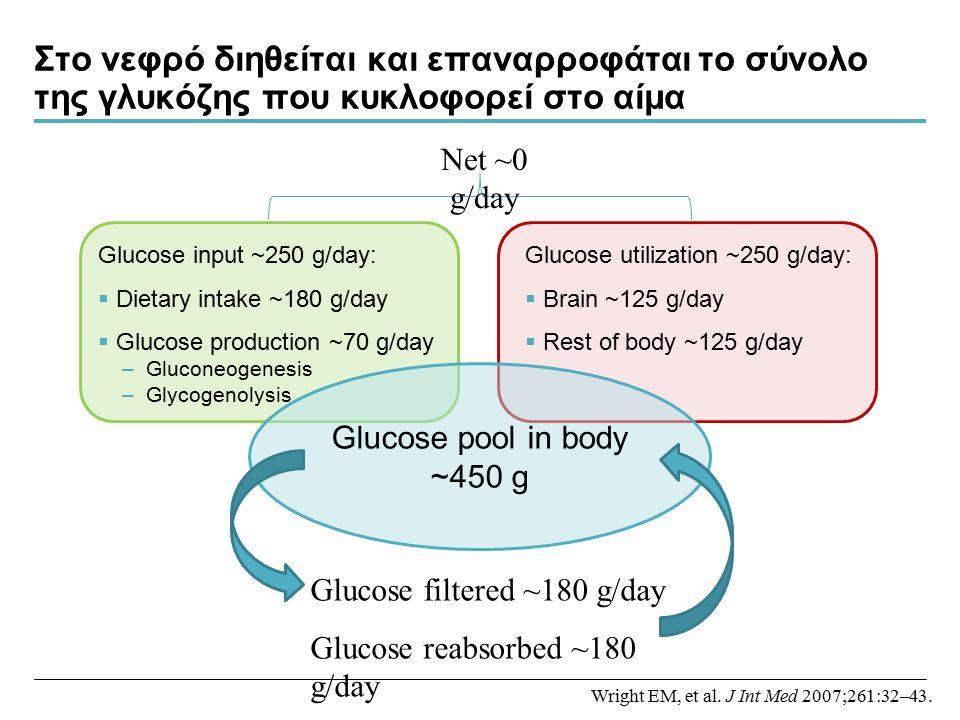 Στο νεφρό διηθείται και επαναρροφάται το σύνολο της γλυκόζης που κυκλοφορεί στο αίμα Glucose input ~250 g/day:  Dietary intake ~180 g/day  Glucose production ~70 g/day –Gluconeogenesis –Glycogenolysis Glucose utilization ~250 g/day:  Brain ~125 g/day  Rest of body ~125 g/day Glucose pool in body ~450 g Glucose filtered ~180 g/day Glucose reabsorbed ~180 g/day Net ~0 g/day Wright EM, et al.