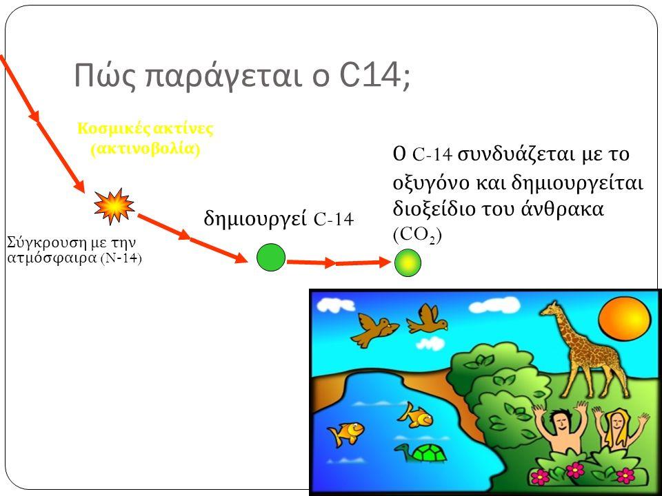 Πώς παράγεται ο C14; Κοσμικές ακτίνες ( ακτινοβολία ) Σύγκρουση με την ατμόσφαιρα (N-14) δημιουργεί C-14 Ο C-14 συνδυάζεται με το οξυγόνο και δημιουργείται διοξείδιο του άνθρακα (CO 2 )
