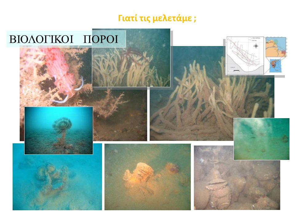 Etiope et al., 2006