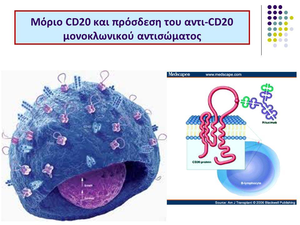 Μόριο CD20 και πρόσδεση του αντι-CD20 μονοκλωνικού αντισώματος