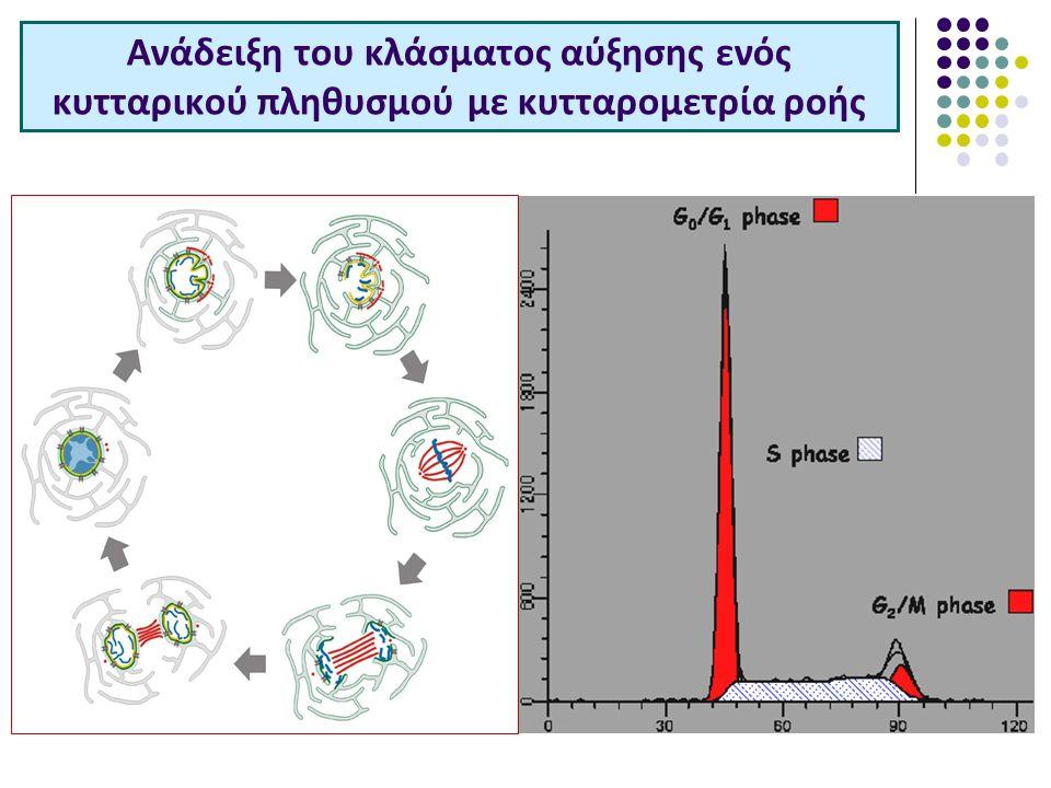 Ανάδειξη του κλάσματος αύξησης ενός κυτταρικού πληθυσμού με κυτταρομετρία ροής