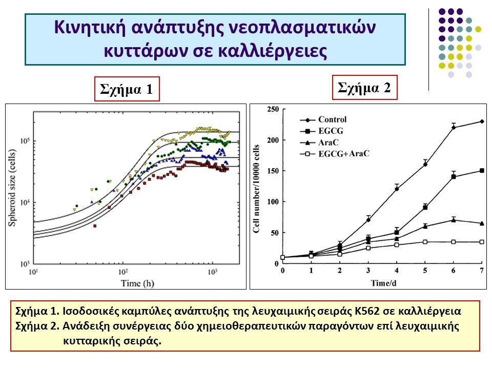 Κινητική ανάπτυξης νεοπλασματικών κυττάρων σε καλλιέργειες Σχήμα 1.