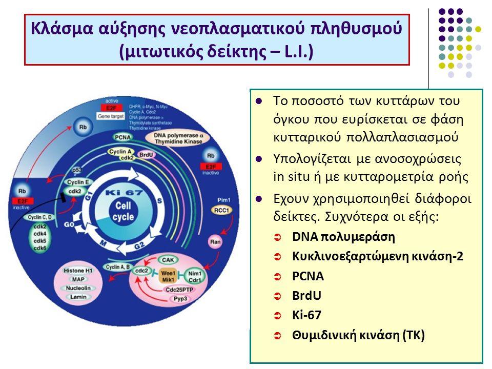 Κλάσμα αύξησης νεοπλασματικού πληθυσμού (μιτωτικός δείκτης – L.I.) Το ποσοστό των κυττάρων του όγκου που ευρίσκεται σε φάση κυτταρικού πολλαπλασιασμού Υπολογίζεται με ανοσοχρώσεις in situ ή με κυτταρομετρία ροής Εχουν χρησιμοποιηθεί διάφοροι δείκτες.