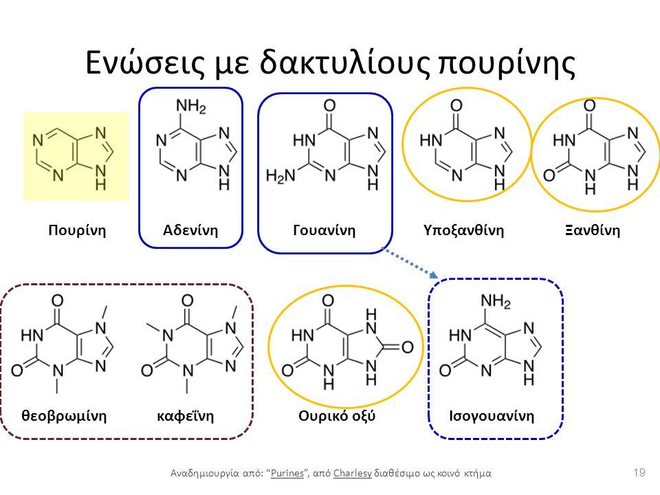 Ενώσεις με δακτυλίους πουρίνης ΠουρίνηΑδενίνηΓουανίνηΥποξανθίνηΞανθίνη θεοβρωμίνηκαφεΐνηΟυρικό οξύΙσογουανίνη 19 Αναδημιουργία από: Purines , από Charlesy διαθέσιμο ως κοινό κτήμαPurinesCharlesy