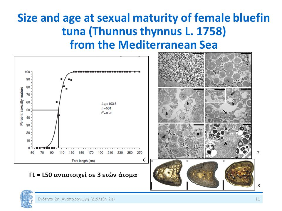 Size and age at sexual maturity of female bluefin tuna (Thunnus thynnus L.