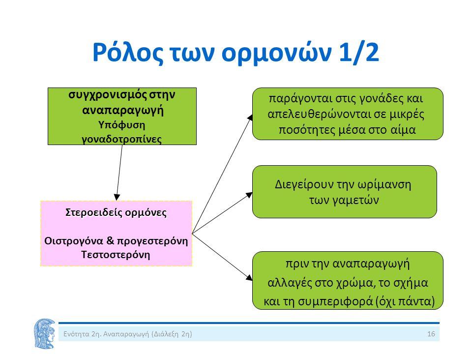 Ρόλος των ορμονών 1/2 συγχρονισμός στην αναπαραγωγή Υπόφυση γοναδοτροπίνες Στεροειδείς ορμόνες Οιστρογόνα & προγεστερόνη Τεστοστερόνη παράγονται στις