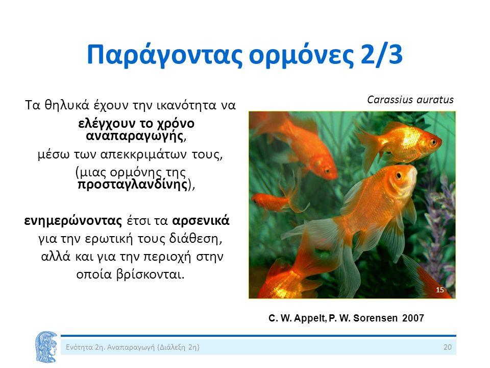C. W. Appelt, P. W. Sorensen 2007 Παράγοντας ορμόνες 2/3 Τα θηλυκά έχουν την ικανότητα να ελέγχουν τo χρόνο αναπαραγωγής, μέσω των απεκκριμάτων τους,