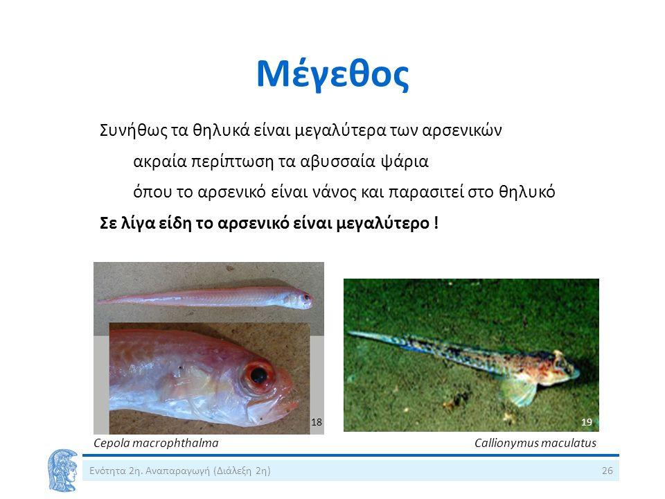 Μέγεθος Ενότητα 2η. Αναπαραγωγή (Διάλεξη 2η)26 Συνήθως τα θηλυκά είναι μεγαλύτερα των αρσενικών ακραία περίπτωση τα αβυσσαία ψάρια όπου το αρσενικό εί