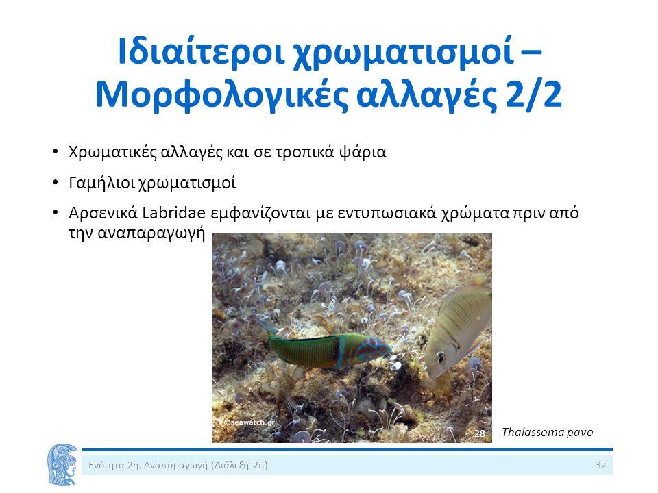 Ιδιαίτεροι χρωματισμοί – Μορφολογικές αλλαγές 2/2 Ενότητα 2η. Αναπαραγωγή (Διάλεξη 2η)32 Χρωματικές αλλαγές και σε τροπικά ψάρια Γαμήλιοι χρωματισμοί