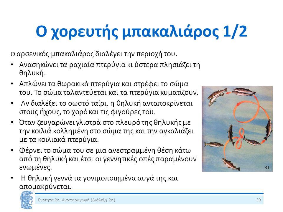 Ο χορευτής μπακαλιάρος 1/2 Ο αρσενικός μπακαλιάρος διαλέγει την περιοχή του. Ανασηκώνει τα ραχιαία πτερύγια κι ύστερα πλησιάζει τη θηλυκή. Απλώνει τα