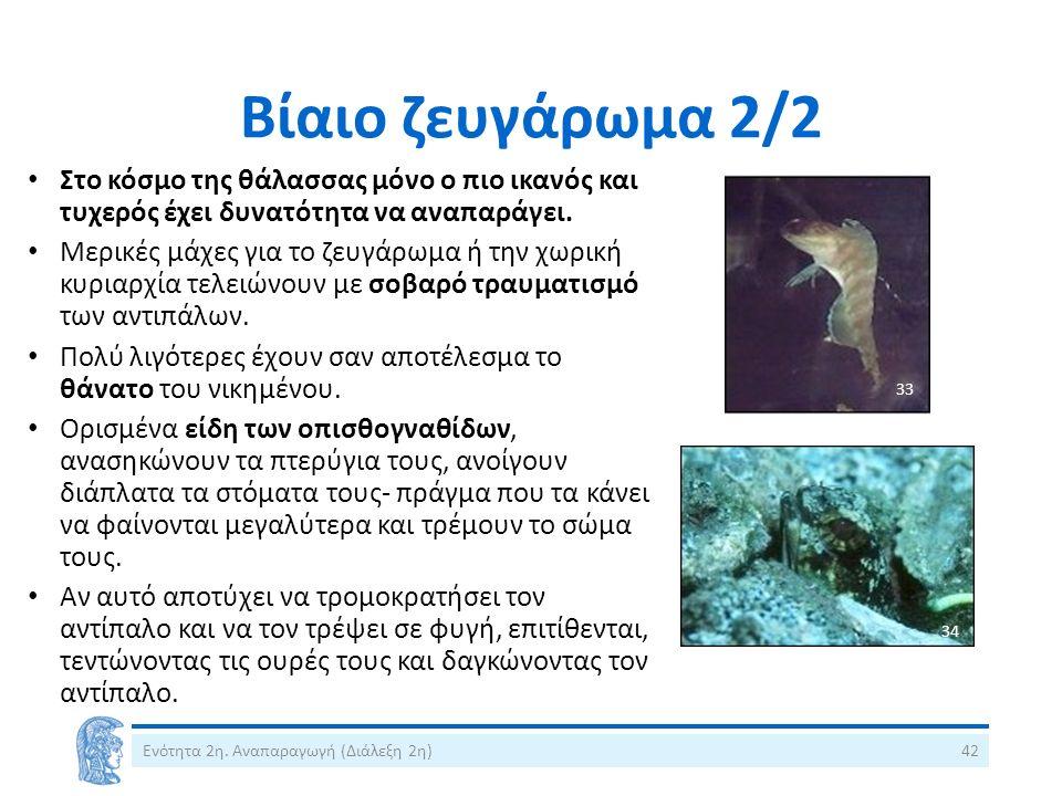 Βίαιο ζευγάρωμα 2/2 Ενότητα 2η. Αναπαραγωγή (Διάλεξη 2η)42 Στο κόσμο της θάλασσας μόνο ο πιο ικανός και τυχερός έχει δυνατότητα να αναπαράγει. Μερικές