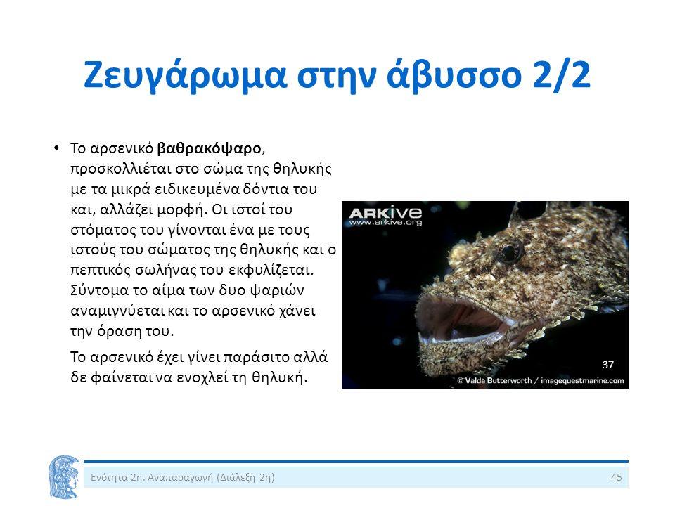 Ζευγάρωμα στην άβυσσο 2/2 Ενότητα 2η. Αναπαραγωγή (Διάλεξη 2η)45 Το αρσενικό βαθρακόψαρο, προσκολλιέται στο σώμα της θηλυκής με τα μικρά ειδικευμένα δ