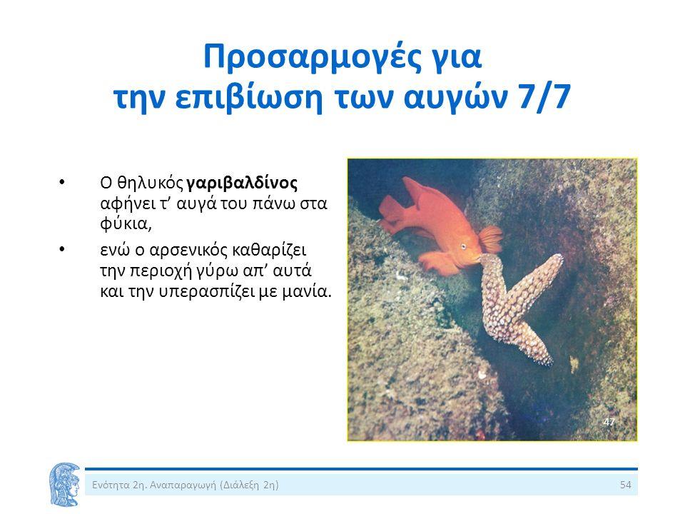 Προσαρμογές για την επιβίωση των αυγών 7/7 Ο θηλυκός γαριβαλδίνος αφήνει τ' αυγά του πάνω στα φύκια, ενώ ο αρσενικός καθαρίζει την περιοχή γύρω απ' αυ