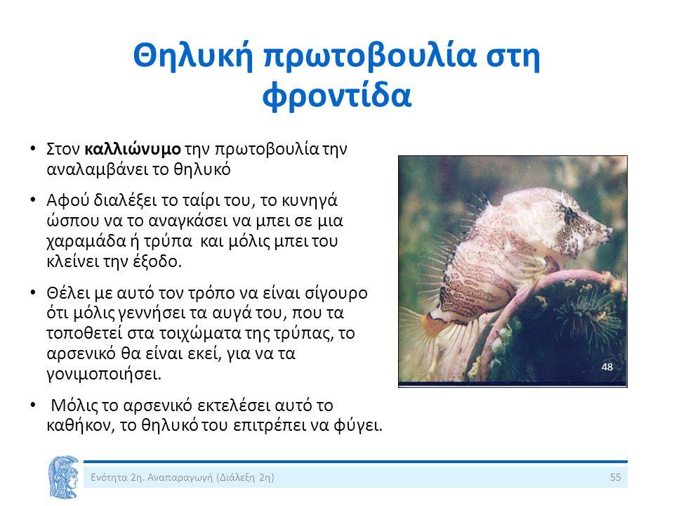 Θηλυκή πρωτοβουλία στη φροντίδα Στον καλλιώνυμο την πρωτοβουλία την αναλαμβάνει το θηλυκό Αφού διαλέξει το ταίρι του, το κυνηγά ώσπου να το αναγκάσει
