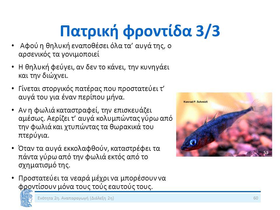 Πατρική φροντίδα 3/3 Αφού η θηλυκή εναποθέσει όλα τα' αυγά της, ο αρσενικός τα γονιμοποιεί Η θηλυκή φεύγει, αν δεν το κάνει, την κυνηγάει και την διώχ