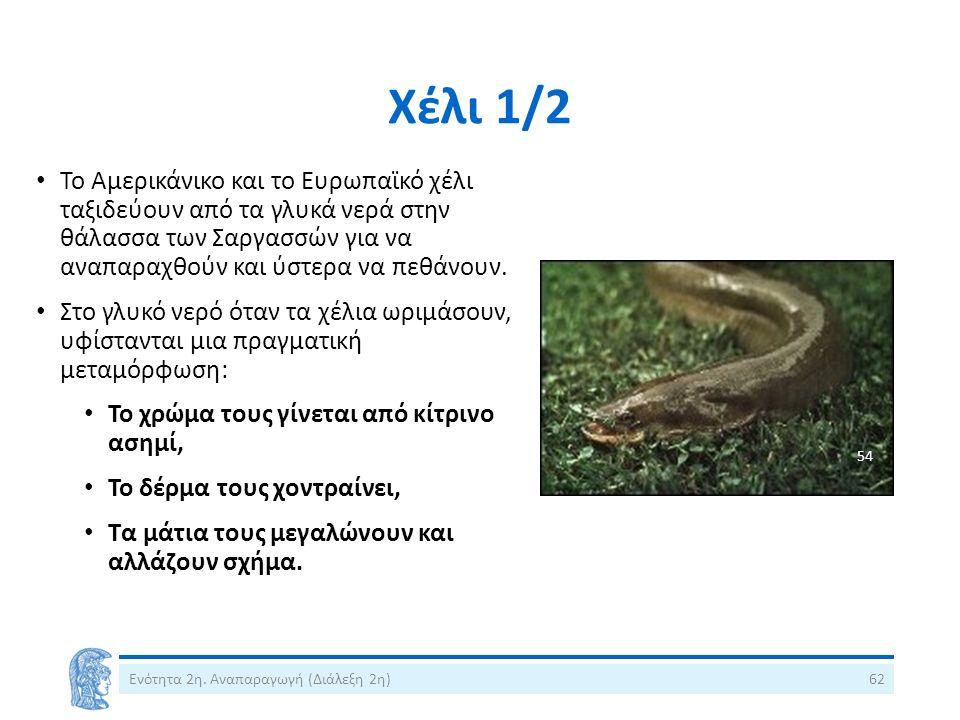 Χέλι 1/2 Το Αμερικάνικο και το Ευρωπαϊκό χέλι ταξιδεύουν από τα γλυκά νερά στην θάλασσα των Σαργασσών για να αναπαραχθούν και ύστερα να πεθάνουν. Στο