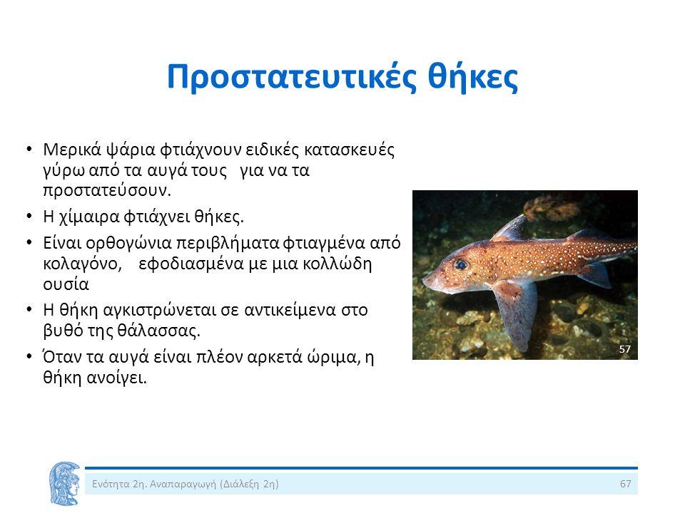 Προστατευτικές θήκες Μερικά ψάρια φτιάχνουν ειδικές κατασκευές γύρω από τα αυγά τους για να τα προστατεύσουν. Η χίμαιρα φτιάχνει θήκες. Είναι ορθογώνι